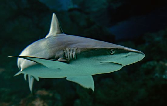 A Bitesize Guide to Sharks